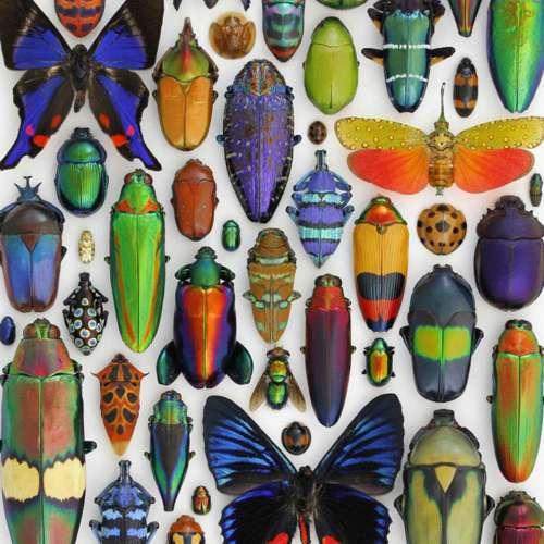 Aesthetica Mosaic | Pheromone Design | A Tribute to Nature