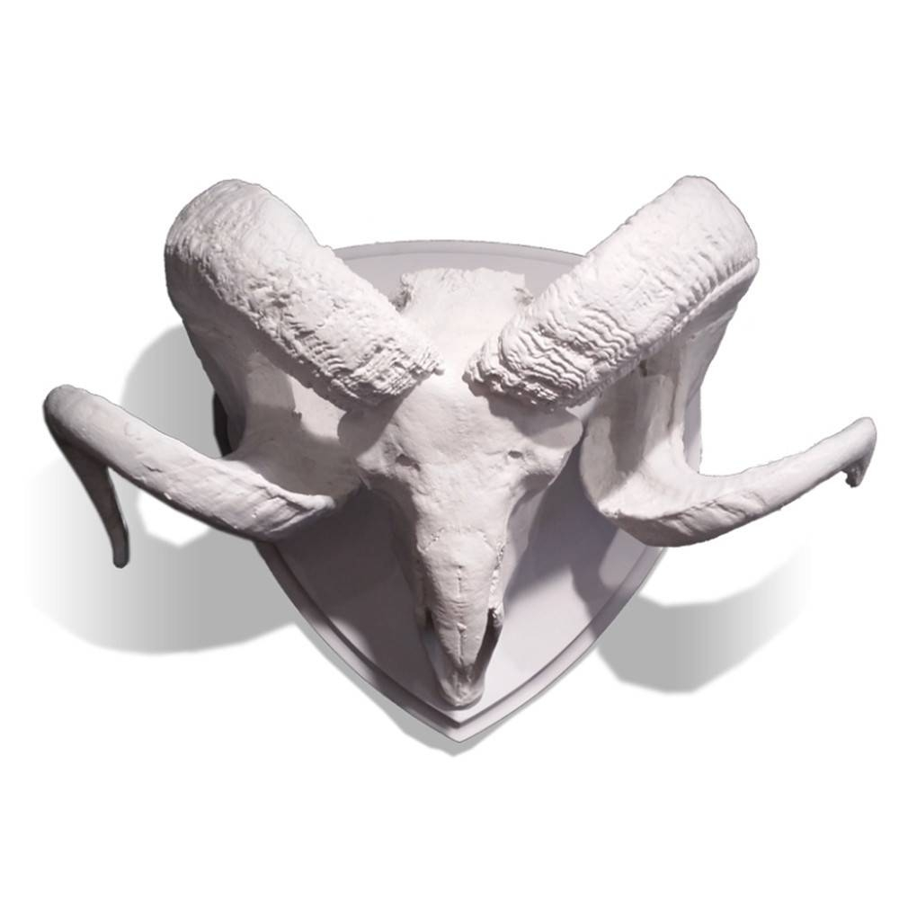 Ram Skull with Horns - Wall Decor for your Home