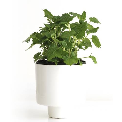 U-Herb Indoor Garden | IntoConcrete