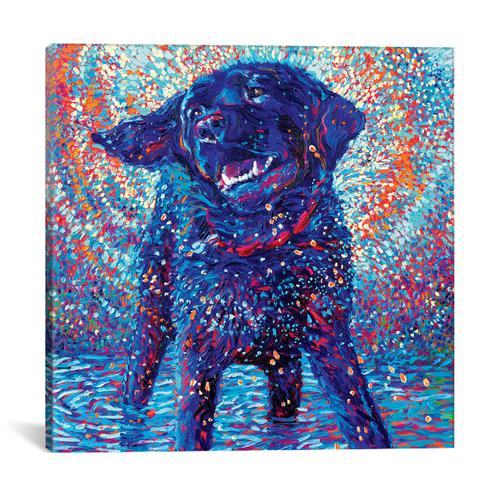 Canines & Color