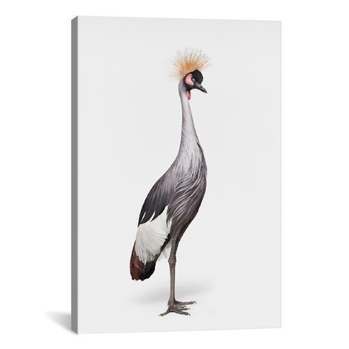 African Crane I
