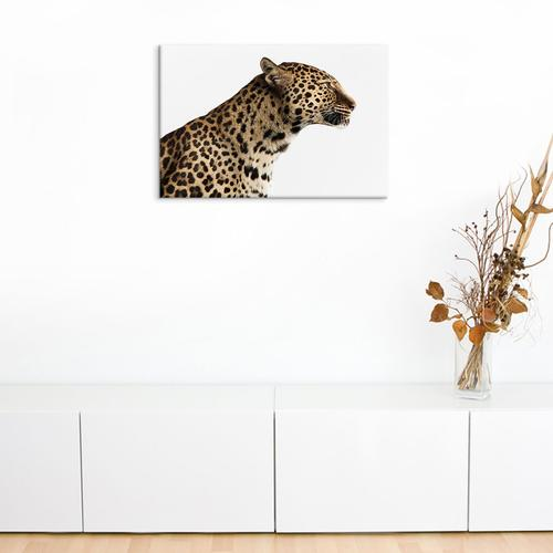 Spotted Leopard I