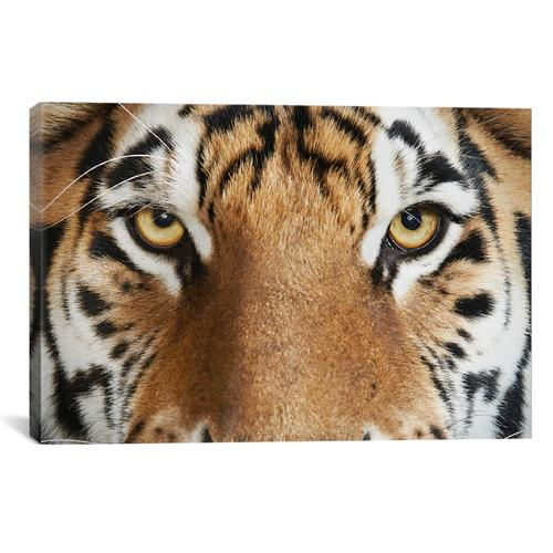 Bengal Tiger IV