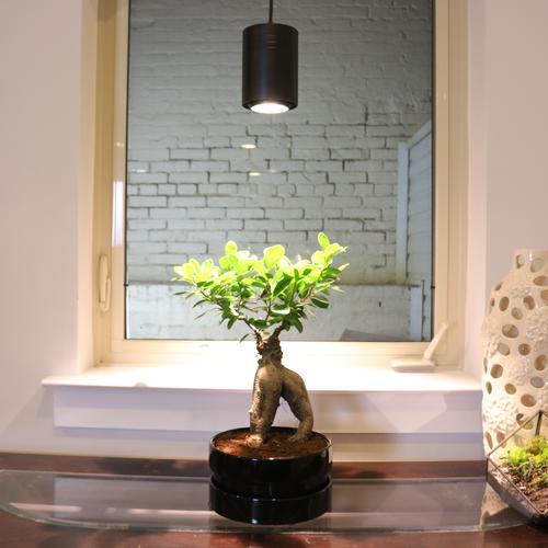 ASPECT 40W LED Pendant Decor Grow Light   Black